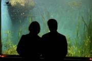 Первые экскурсии пройдут в Приморском океанариуме в мае 2016 года