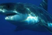 Акула откусила руку бразильскому туристу