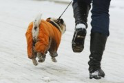 Астраханские чиновники выйдут на пробежку утром 1 января