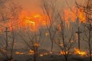 В Калифорнии выгорело более 4 кв. км леса