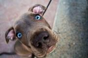 В Москве мужчина из 9 этажа выкинул собаку, которая просилась гулять
