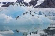 Северный полюс растаял