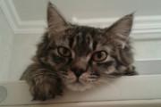 «Алло, полиция? На меня кот странно смотрит!»