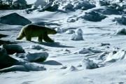 В СФ и палате адвокатов просят расследовать жестокое убийство медведя