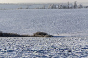 В Бурятии в степи замерз юный сборщик конопли