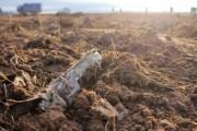 Названы виновные в авиакатастрофе с Boeing в Казани