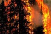 Пожар уничтожил более 100 домов в Австралии на Рождество