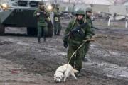 В Дагестане обнаружили тайник со взрывчаткой