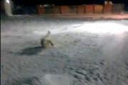 Министр природы: взрывчатку для медведя чем-то намазали