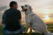 Собаки усиливают сексуальную привлекаельность хозяев