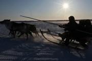 Менеджеры «Газпрома» погибли в перестрелке с оленеводами