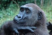 Ветеринар по ошибке сделал анестезию работнику зоопарка