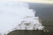WWF возмущен трагедией с медведицей на острове Врангеля