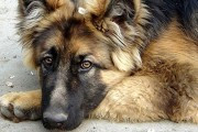 В одной из квартир Санкт-Петербурга нашли труп женщины благодаря собаке