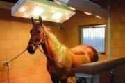 В большом цирке в Москве появится солярий для лошадей