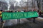 Поляки протестуют из-за вырубки Беловежской пущи