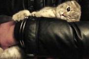 Прощание с котиком Моней растрогало сотрудников ФСКН