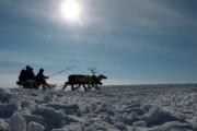 Саамские оленеводы в новогодние каникулы работают в тундре