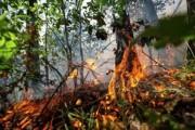 В австралийском Ярлупе сгорели почти 100 домов