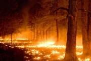 Исторический город Австралии Ярлуп практически уничтожен лесным пожаром