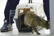 Кошка, съевшая рыбу на 63 тысячи рублей, из-за болезни села на диету