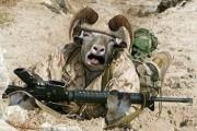 В Волгограде баран выстрелил в спину хозяину