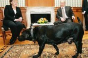 Немецкий таблоид обвинил Путина во лжи