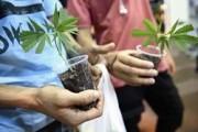 В Красноярске задержан менявший наркотики на фрукты сыроед