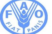 ФАО призвала избавляться от запрещённых пестицидов