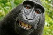 В Таиланде обезьяна покусала четырехлетнего мальчика из России