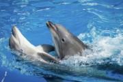 После смерти изъятого с частной фермы на Кубани дельфина открыто дело
