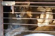 Десятки животных погибли при пожаре в зоогалерее в Иркутске